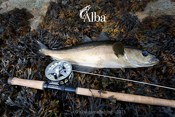 fly fishing, pollock, West Scotland, winter shore fishing, fly fishing, best sea fishing spots,