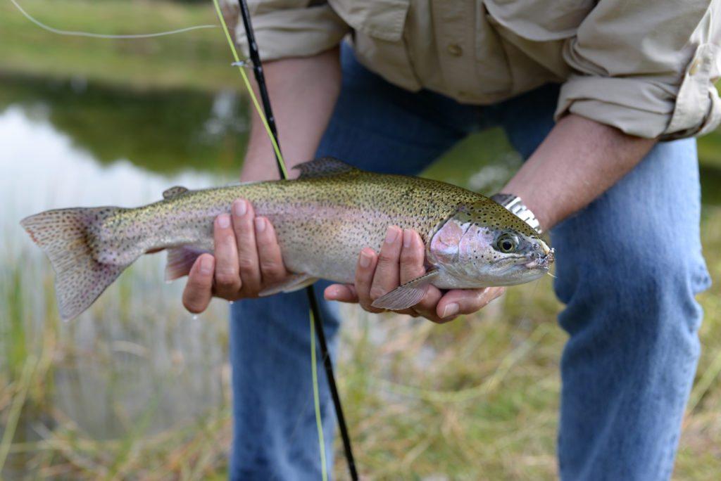 rainbow trout, trout fishing scotland, fishing near Edinburgh, catch and release