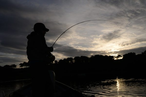 trout fishing, dry fly, evening rise,