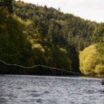 river Tweed, dry fly, brown trout, fishing guide, Scotland