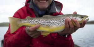 Wild brown trout, shetland loch, Alba Game Fishing, trout, catch and release