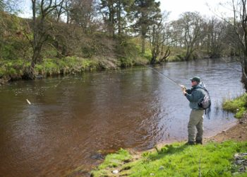 river annan, brown trout, grayling, dry fly,