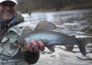 Grayling, River Tweed, winter fishing