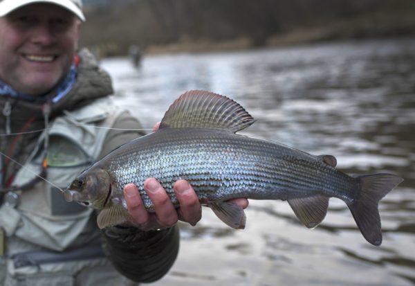 Grayling, River Tweed, winter fishing
