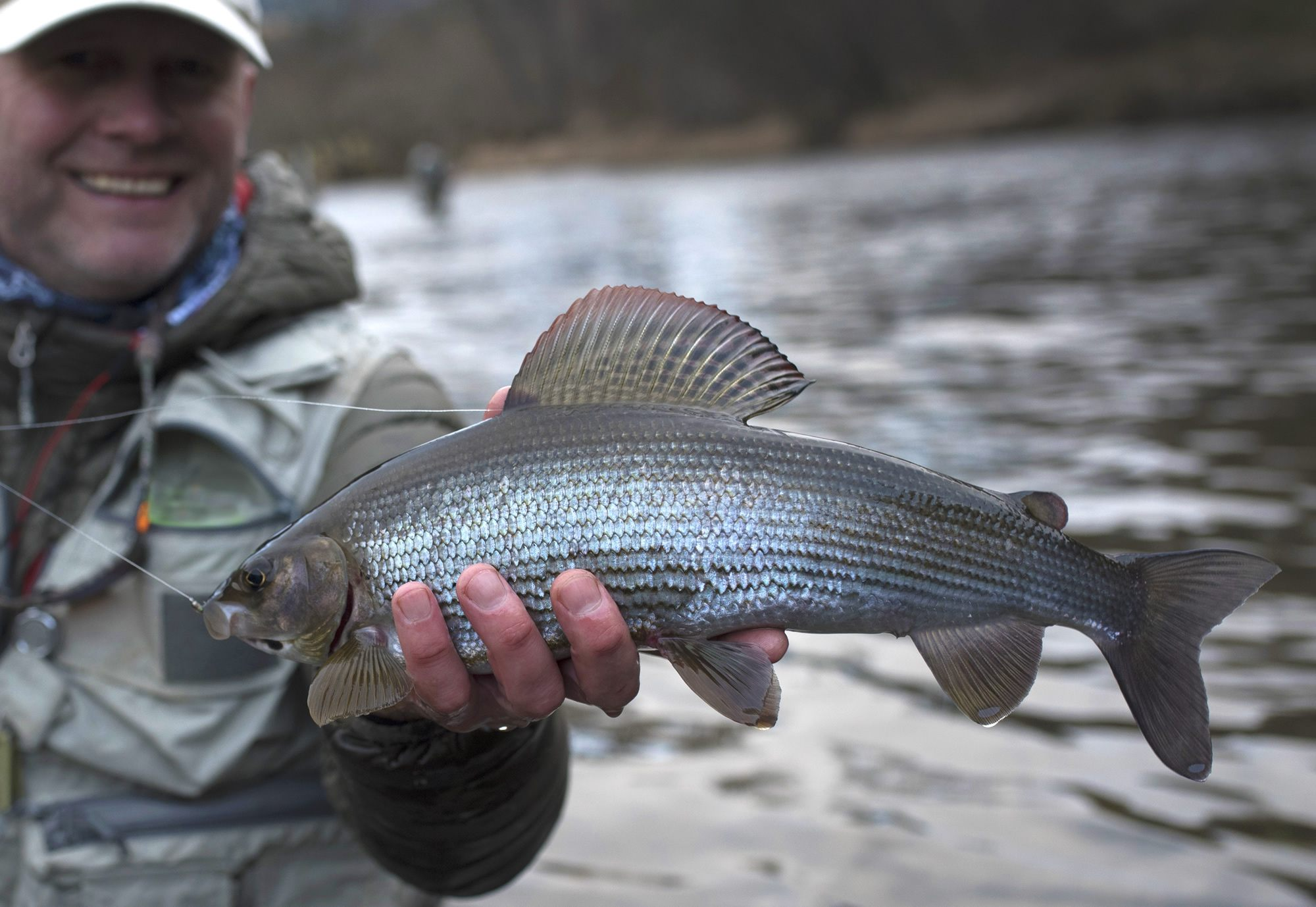 Fishing for grayling: features and technique of fishing 1
