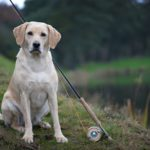 mans best friend, fishing dog, orvis, Alba fishing guide Scotland
