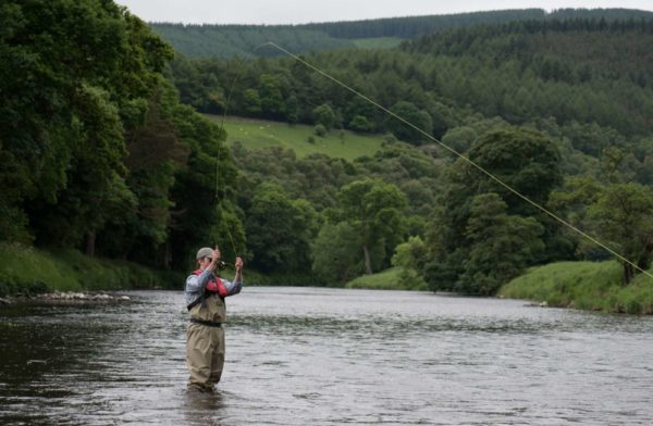 river fishing near Edinburgh, River Tweed, dry fly, Scotland