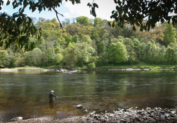 Salmon fishing River Tay with guide, spey casting, river Tay, salmon guide, Atlantic Salmon, Scotland, near Edinburgh, near Glasgow