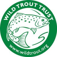 Wild trout trust, wild brown trout, Alba Game Fishing, Barrio Fly Lines