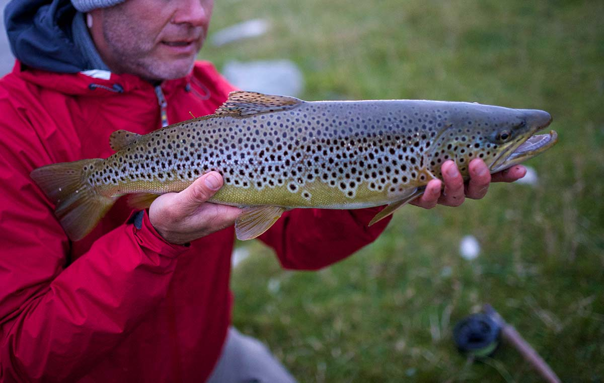 Wild brown trout fishing in scotland orvis guides for Fish s wild