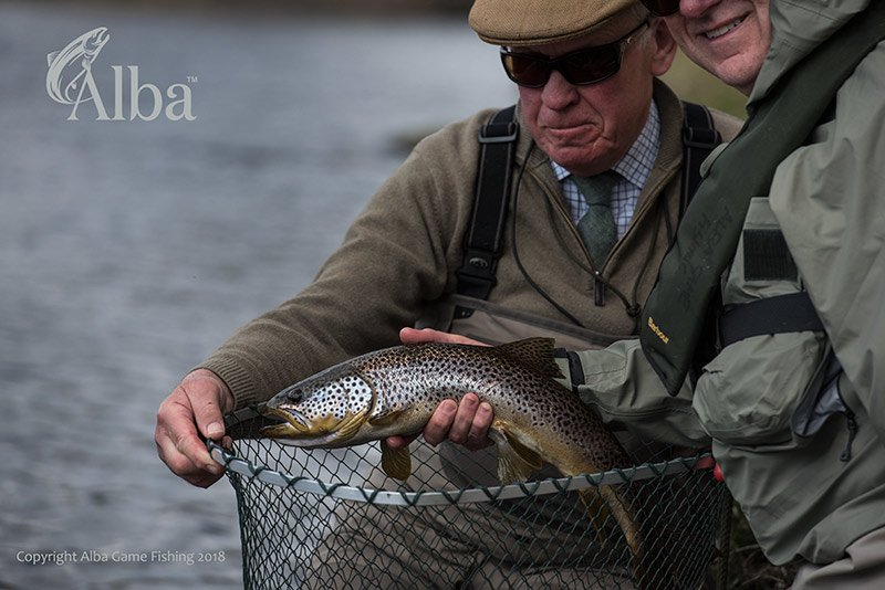 River Spey, Dry Fly, Wild Brown Trout, Alba Game Fishing, Fly Fishing, Scotland