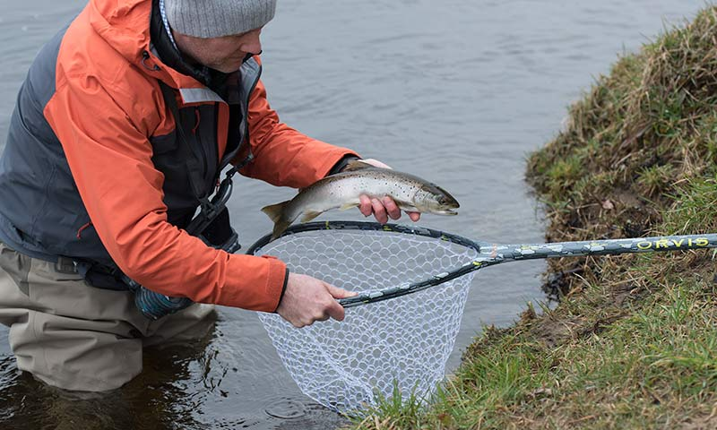 sea trout, wild brown trout, dry fly, river tay, orvis guide, alba game fishing, olive fly